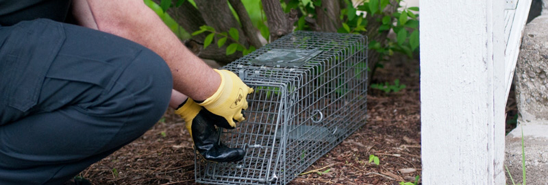 Animal Removal Tampa Fl Wildlife Critter Control