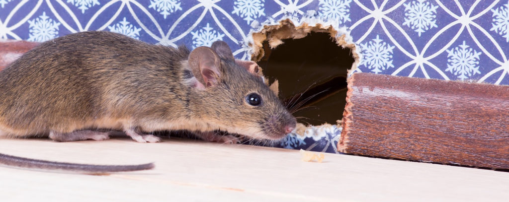 Mouse Mousehole4new Critter Control Tampa
