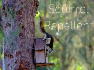 Squirrel Repellent Critter Control Tampa