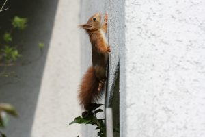 Tampa - Squirrel Exterminator