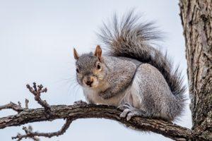 tampa squirrel