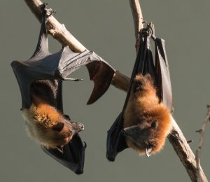 Tampa Bat