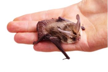 Bat in Hand