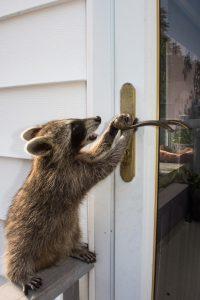 Urban Wildlife Removal