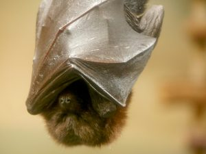 Keeping Your Workplace Bat-Free