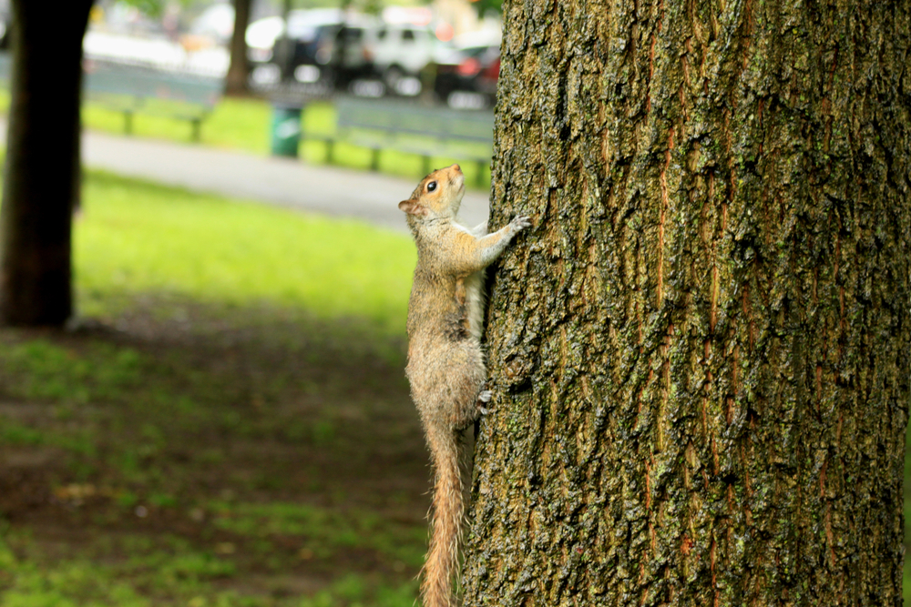 Rodent Prevention Tips Critter Control Tampa