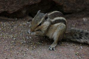 Symptoms of a Sick Squirrel