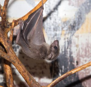How to Clean Up Bat Guano