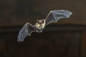 The Effects of Bat Guano on Your Commercial Building