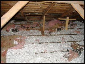 rats in attic tampa