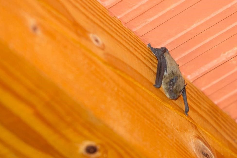 A bat in the house