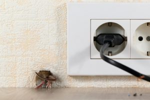 Signs Your Commercial Building Has Rodents in the Walls