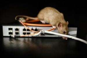 What Types of Animals Chew on Wires?