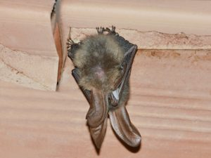 What Is White-Nose Syndrome?