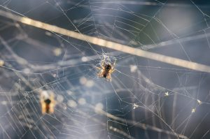 How to Identify Poisonous Spiders in Florida