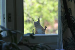 4 Household Nuisances Caused by Squirrels