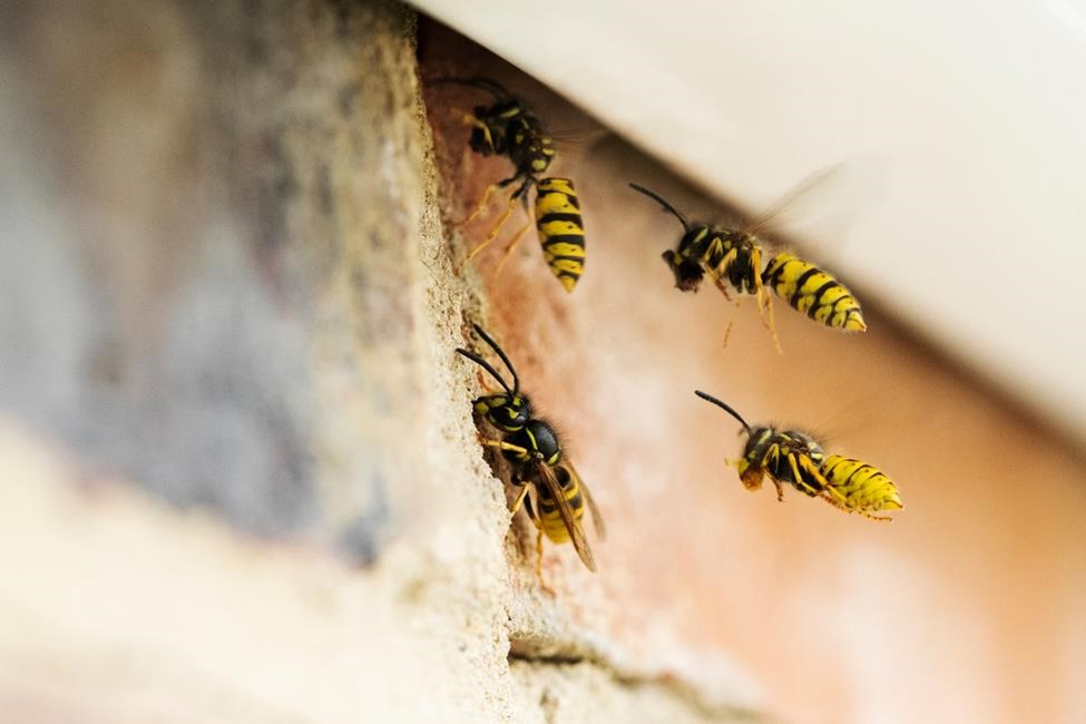 Wasps by a house