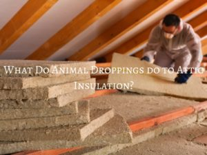What Do Animal Droppings Do To Attic Insulation Critter